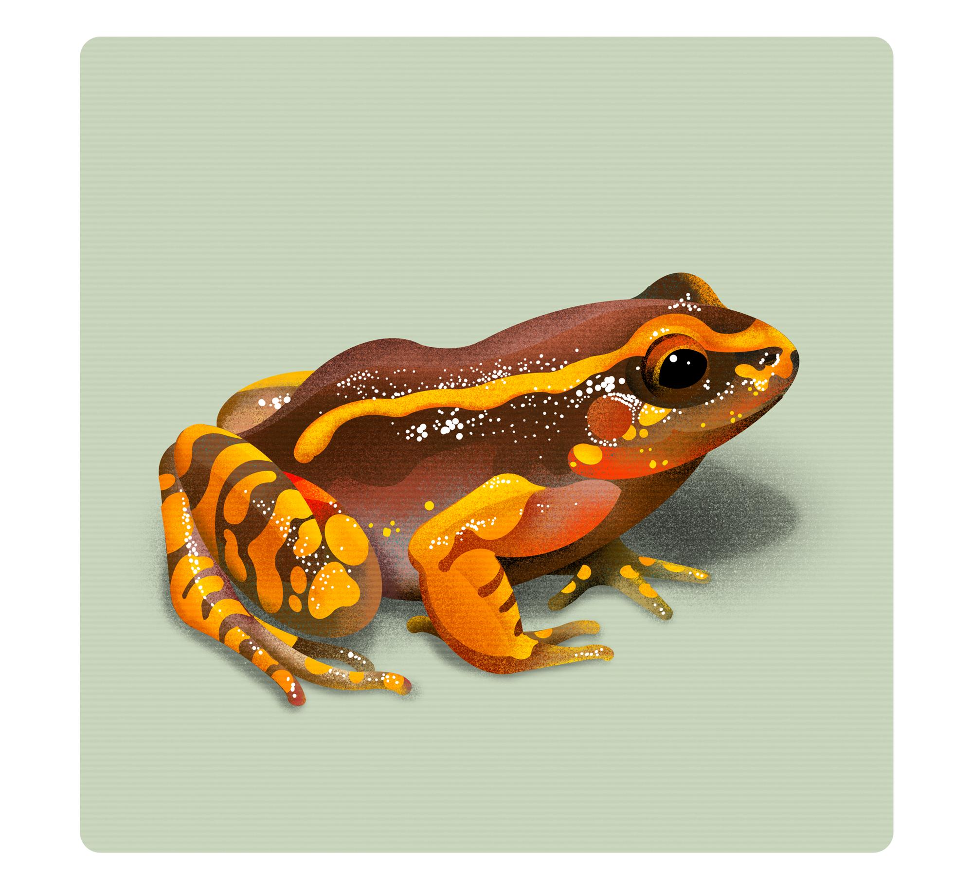 Frog Illustrations |  | Makemark