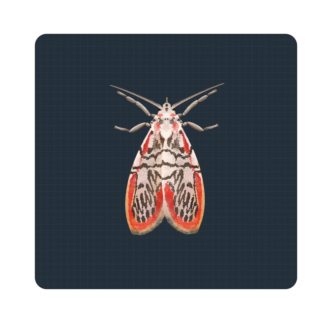 Moth Illustrations |  | Makemark